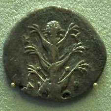 Coin from Cyrene, silphium