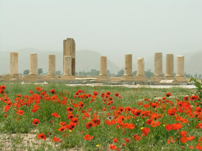Pasargadae, Palace P with poppies