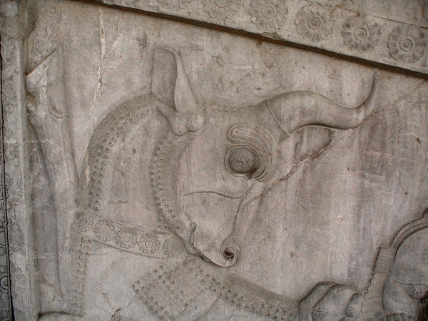 Persepolis, Apadana, East Stairs, northern part, bull
