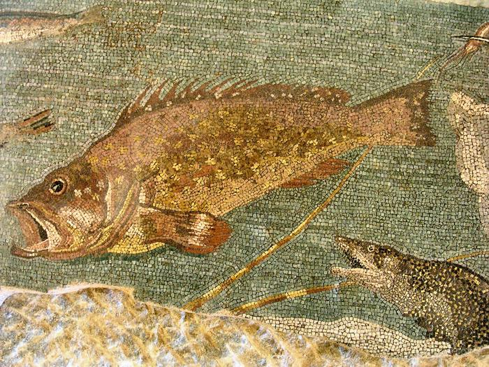 Roman town: mosaic with fish