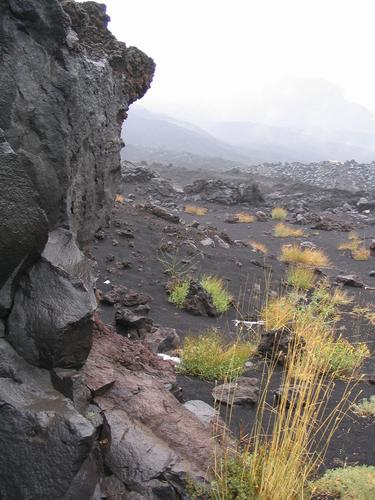 Vegetation of the Etna
